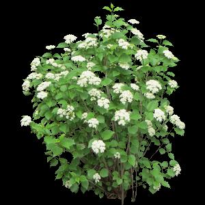 plant-bush-flower