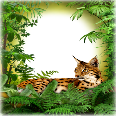 jungle frame wild cat cadre