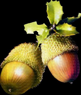 acorn autumn  deco gland automne
