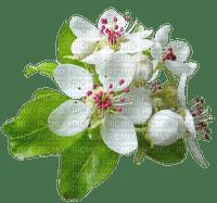 fleurs ...de poirier