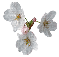 flower White Teeh .•´✿•