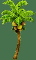 palm paume palme beach