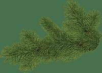 fir leaves branch, feuilles de sapin, branche