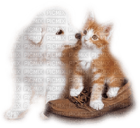 dog with cat bp