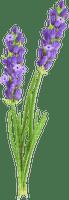 lavender, purple flower, sunshine3