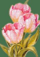 pink tulips spring flowers tulipes fleur printemps