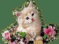 baby cat in flowers