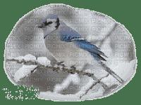 winter birds oiseaux hiver
