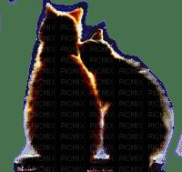 LOVE CAts chats amour de tendresse