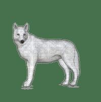 Tournesol94 animaux