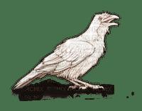 White Raven-TUBE by RAVENSONG