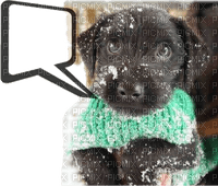 winter dog chien hiver text