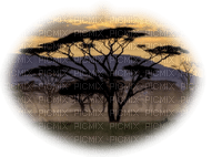 africa PAYSAGE afrique