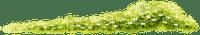 bordure herbe