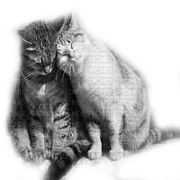 LOVE CAts chats amour
