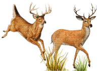 cerf- deer-forêt-daim-bois