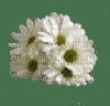 Boquet fleurs