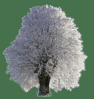 tree arbre baum winter hiver snow neige