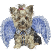 dog chien hund angel ange