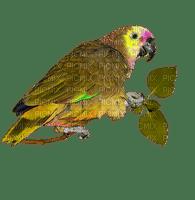 perroquet-parrot