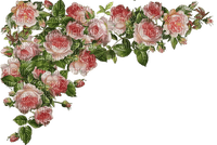roses border pink rose bordure pink