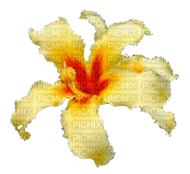 flor palo borracho fleur jaune