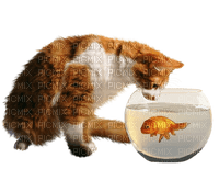 cat chat katze cats katzen chats animal tube  animals fish poisson fisch glas glass jar