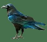 oiseaux (