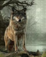 Eliana Angel Wolf