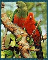 image encre couleur la nature oiseaux edited by me