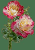 kukka flower fleur rose
