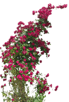 Kaz_Creations Garden Deco Flowers