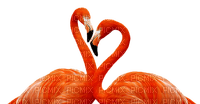 lintu, flamingo, bird