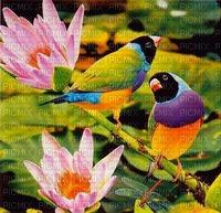 image encre couleur effet la nature oiseaux fleurs edited by me