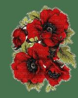 blommor-flowers-red--röd
