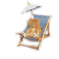 cat beach chair summer  chat êtê