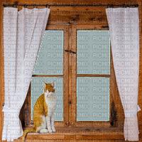 window fenster fenêtre fenetre room raum chambre zimmer tube wood brown deco cat