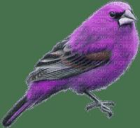oiseau violet.Cheyenne63