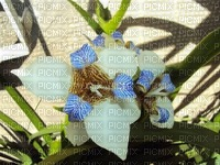 orchidea.quieromas