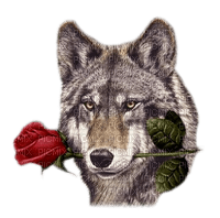 louve & rose