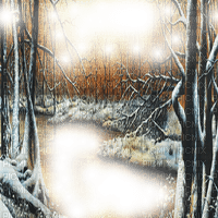 forest frame winter forêt hiver cadre