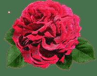 ruusu, rose