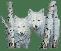 loup blanc white wolf