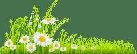herbe fleur grass flowers daisy