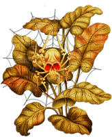 soave deco gothic halloween leaves branch skull