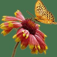 Fleur.Flower.Butterfly.Papillon.Victoriabea