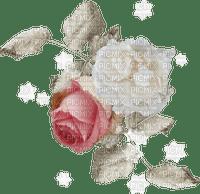 Roses blanche et rose