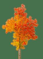 trees Nitsa