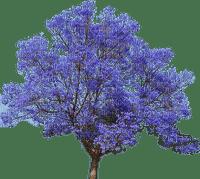 spring printemps tree arbre baum garden purple blossom fleurs fleur blüten tube jardin