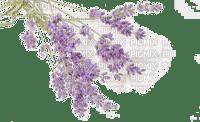 lavender, sunshine3
